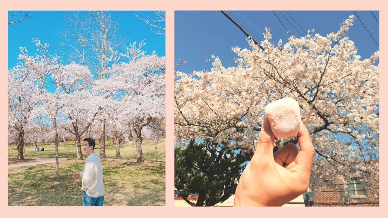 Cherry blossoms falling.../Sakura trip, part2 (Jinhae)