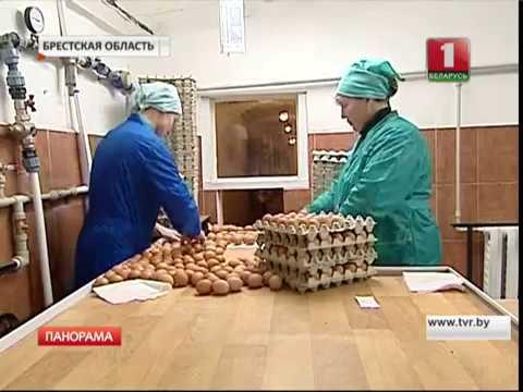 Барановичская птицефабрика является одним из крупнейших производителей яиц и мяса в брестской области. Предприятие было основано в 1971. Куры-несушки, выращиваемые на предприятии, откармливаются натуральными продуктами на основе зерен и растительных белков. В 2003 году в состав.