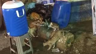 Кот священное животное Египта. Голодные коты в Шарме