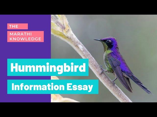 Essay song hummingbird cover letter ending