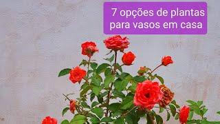 7 Plantas Em Vasos Que Você Pode Cultivar Até Na Sacada do Apartamento