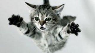 Смешные ФЕЙЛЫ из жизни непоседливых котов! Ржач гарантирован!