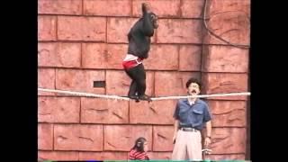 1993年8月7日 伊豆シャボテン公園 チンパンジー 若かりし日の堤トレーナー.