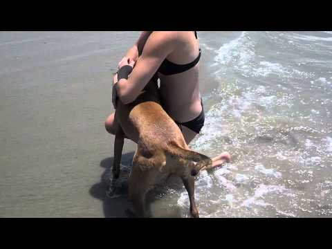 Puppy Stars first time in beach water. Hilarious!
