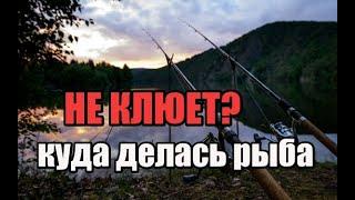Почему не клюет куда делась рыба и кто её всю выбил