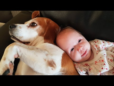 Our Baby Begins to Recognize Her Dogs | Cute Moments