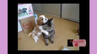 Funny animals #8