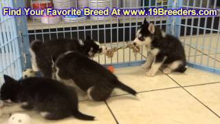 Siberian Husky, Puppies, For, Sale, In, Columbus, Ohio, Oh, North Ridgeville, Mason, Bowling Green,