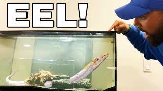 ALBINO SWAMP EEL CAUGHT in FISH TRAP For HOME AQUARIUM! *NEVER BEFORE SEEN*