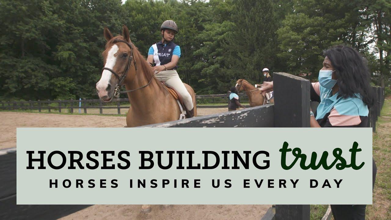 Horses Building Trust