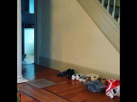Singapura cat plays fetch like a pro!