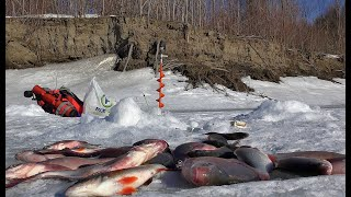 НАШЕЛ ЛЕЩА И ОКУНЯ ПОД БЕРЕГОМ Рыбалка на комбайны безмотылка Первый лед уже на днях очень жду