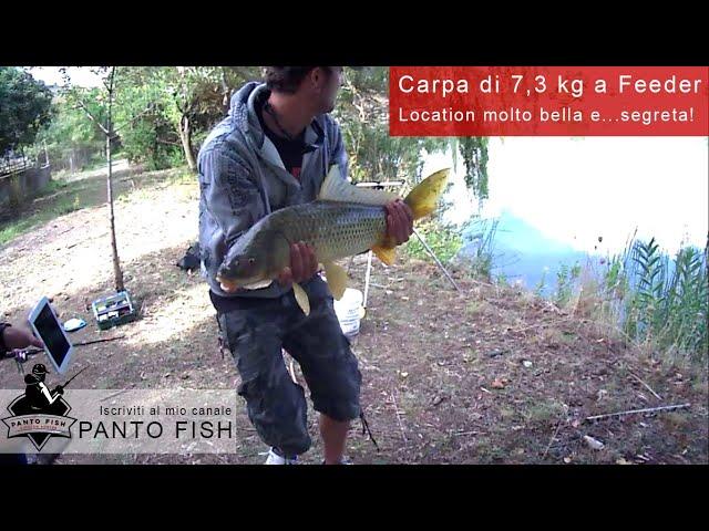Carpa 7,3 kg feeder Sicilia