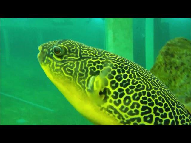 Sub Aqua Club Wiltz @ TODI