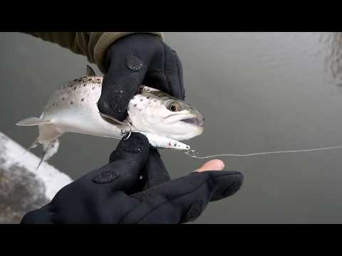One Day Of Winter Fishing In Denmark (sea Trout, Flat Fish)