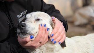 Interwencja obrońców zwierząt w Kutnie. Psy odebrane z tragicznych warunków