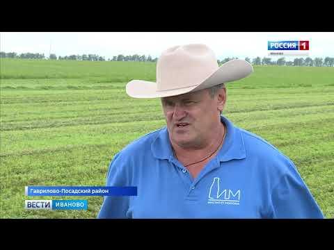 День поля в Ивановской области прошел в новом формате