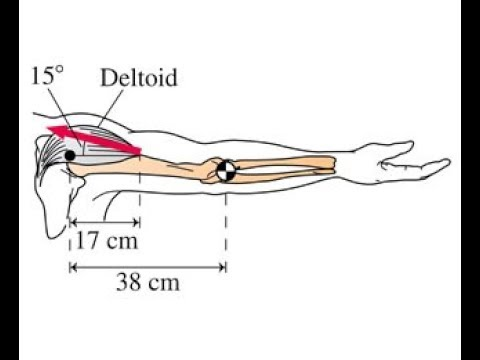 Force acted on arm by Deltoid Musicle - using Torque - YouTube