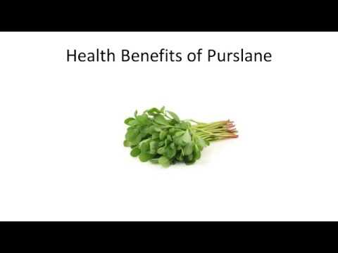 Top 10 Health Benefits and Advantages of Eating Purslane 75