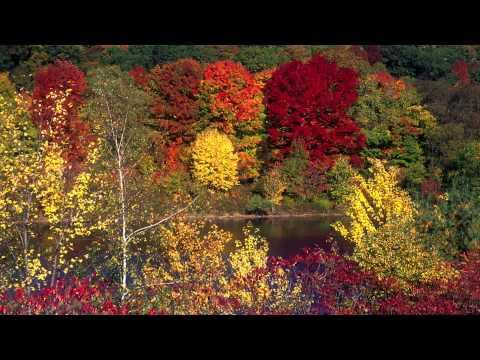 Explore White Mountain National Forest