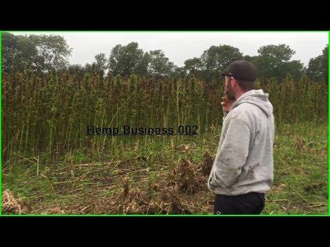 Hemp Farming Basics – Growing Hemp In Ireland