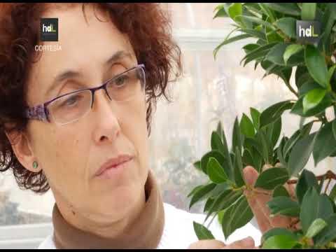 Investigación para conservar especies vegetales amenazadas