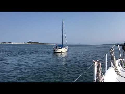 Kat Jackson - Orca Pulls Sailboat in Harbour