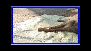 Wolf von Auto erfasst und getötet
