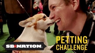 westminster kennel club dog show petting challenge