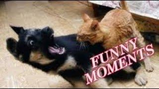 Funny Animals videos compilation 2018 #1