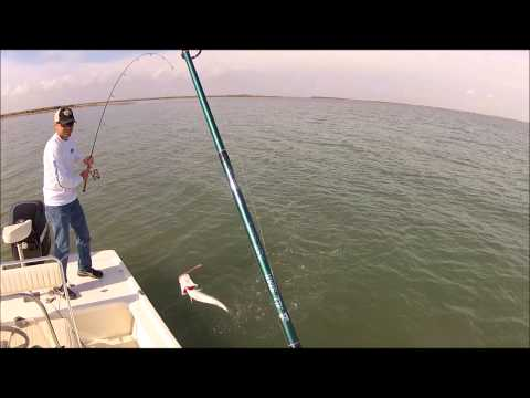 Speckled Trout on the Texas Coast.