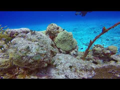 SWS customer videos | Little Trunkfish