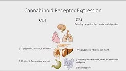 Steve Ottersberg - Physiological Basis of the Endocannabinoid System, and Phytocannabinoids - AHS19