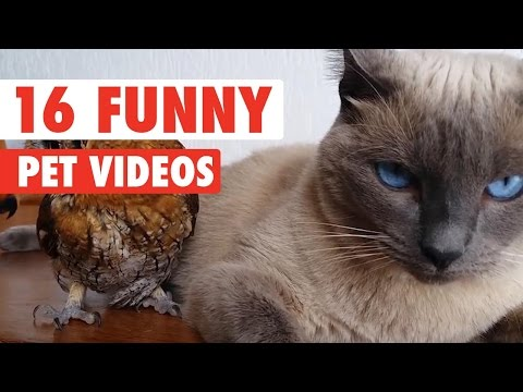 16 Funny Pet Video Compilation 2016