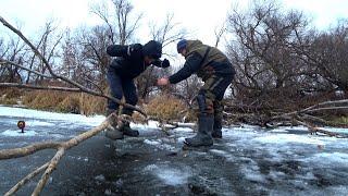 Да СКОЛЬКО ЖЕ ИХ в этих КОРЯГАХ Первый лёд зимняя рыбалка и жерлицы