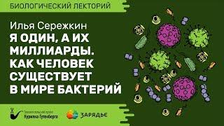 Биолекторий | Роль бактерий в организме – Илья Сережкин