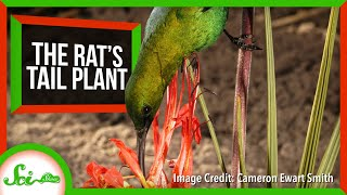 The Plant That Grows Perches for Birds