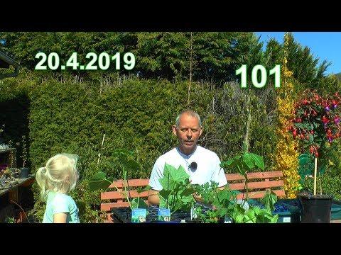 garten-hochbeete-erste-gemüse-bepflanzung-/-wichtig-schlangengurken