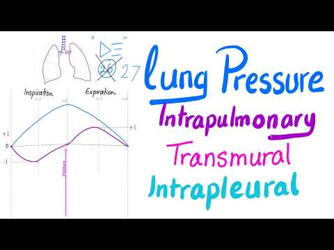 lung-pressures-(intrapulmonary,-intrapleural-and-transmural-pressures)-|-lung-physiology