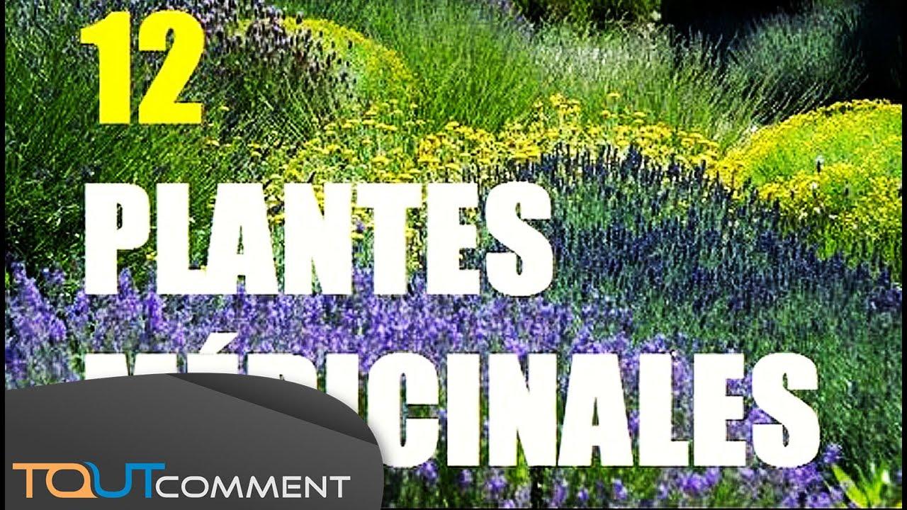 12 plantes m dicinales pour se soigner naturellement youtube - Plante pour soigner les verrues ...