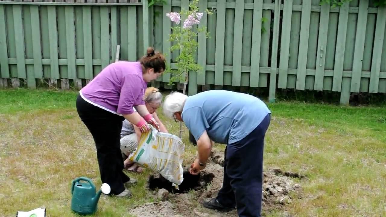 ou planter un lilas