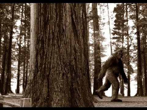 Chased By Bigfoot Whilst Metal Detecting!! (66)