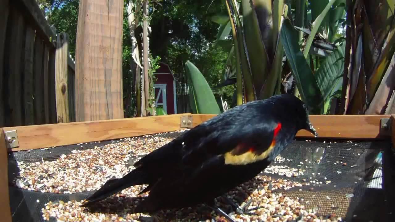bird feeder in florida youtube