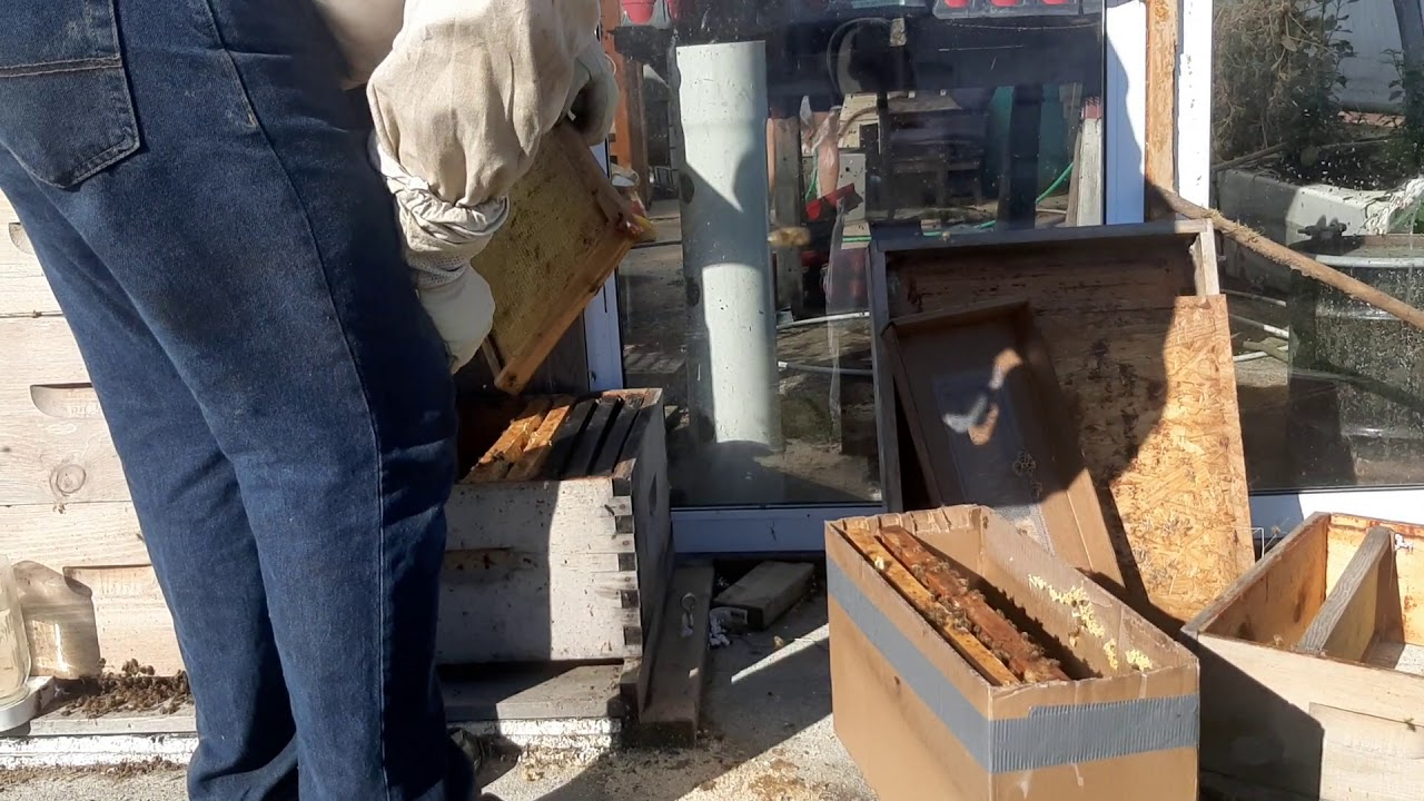 2020 Bee Nuc Install