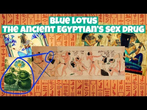Blue Lotus The Ancient Egyptians Party Drug History What It Is