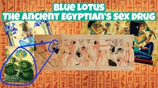 Blue Lotus- The Ancient Egyptian's Party Drug- History, What It Is, How It Works And Its Effects