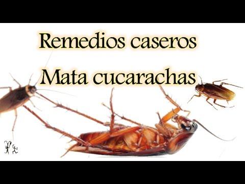 Como eliminar cucarachas sin toxicos peligrosos doovi - Plaga de hormigas en mi casa ...