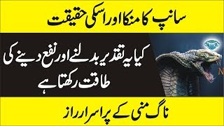 ناگ منی کے پراسرار راز -  Does Cobra Pearl Exists -  Interesting Facts Of Cobra Pearl