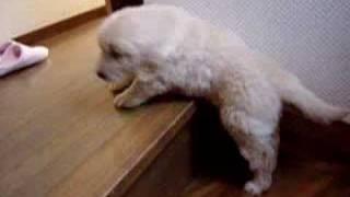 Cocoがんばれ! thumbnail