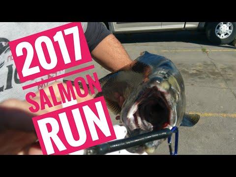 Waukegan  IL  Salmon  Fishing With  Bass  Gear